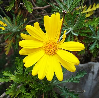Flower, Yellow Flower, Yellow, Nature, Flowers, Spring