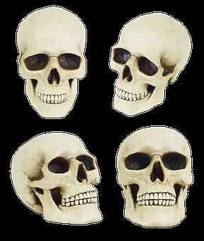 Skull, Anatomy, Jaw, Cheekbones, Human Skull, Dummy