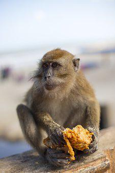 Monkey, Kfc, Junk Food