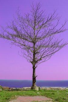 Beach, Tree, Nature, Lilac Nature, Lilac Beach