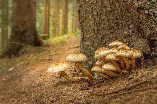 Mushroom, Sparriger Mushroom, Log, Forest Floor, Nature