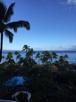 Palm Tree, Landscape, Tropical, Palm, Palm Trees, Ocean