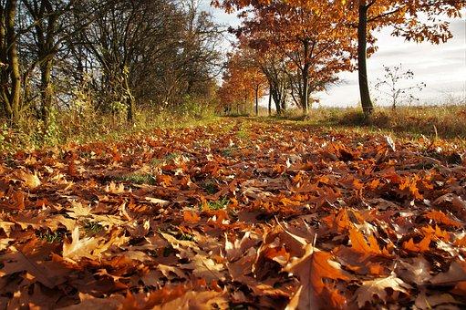 Autumn, Fallen Leaves, The Fallen, Golden Autumn, Path