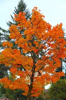 Fall, Autumn, Nature, Park, Season, Red, Outdoor, Leaf