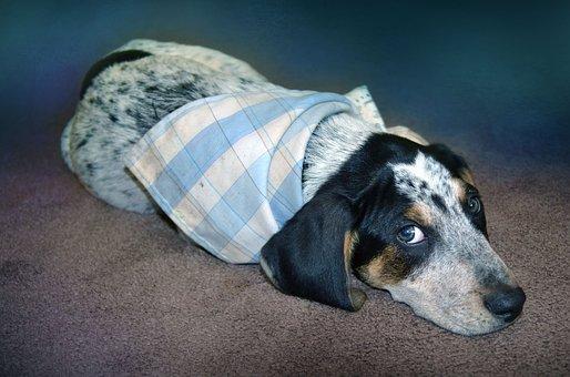 Puppy, Blue, Dog, Sad, Scarf, Spots