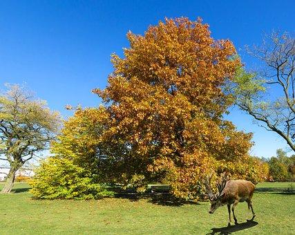 Nature, Landscape, Autumn, Tree, Leaves, Fall Foliage