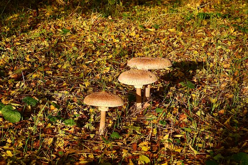 Mushrooms, Forest, Collect, Wild Mushrooms