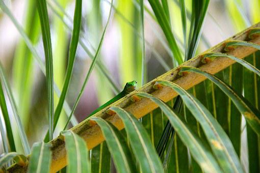 Reptile, Plant, Cactus, Agave, Tropics, Aloe Vera