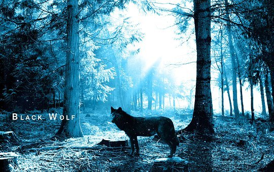 Wolf, Forest, Trees, Black, Nightmare, Scary