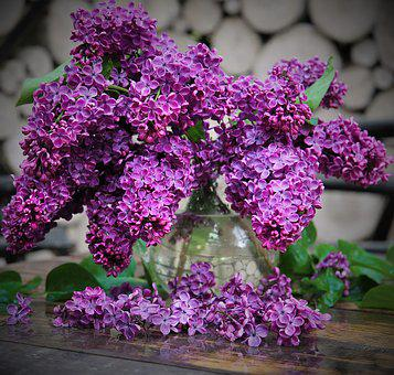 Lilac, Bloom, Spring, Flowers, Plant, Nature, Closeup
