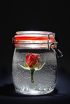 Rose, Red, Jar, Freeze, Rose Blooms, Red Rose, Flower