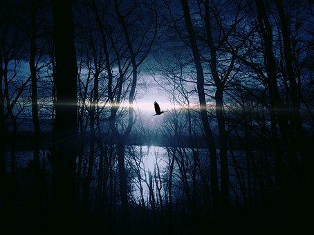 Bird, Fly, Gespentisch, Night, Weird, Night Sky, Lake