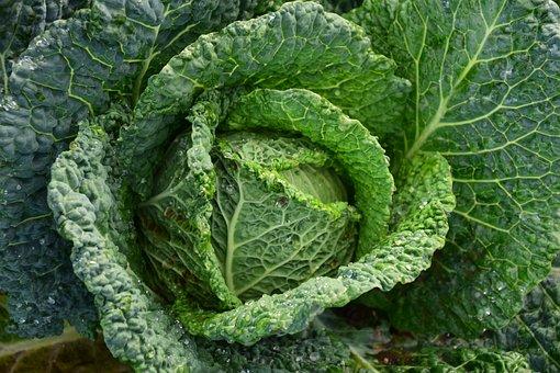 Savoy, Savoy Cabbage, Healthy, Vegetables, Kohl, Green