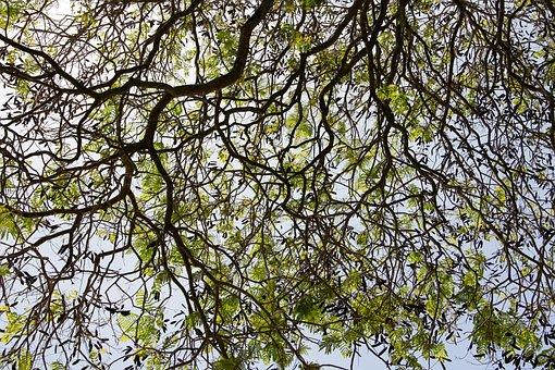 Tree, Plant, Cactus, Agave, Tropics, Aloe Vera