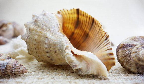Shell, Shells, Nature, Beautiful, Beauty, Seashell, Sea