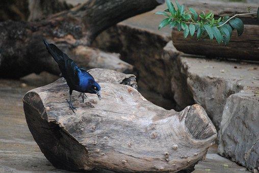 Bird, Crow, Witch, Black, Nature, Animal, Wildlife