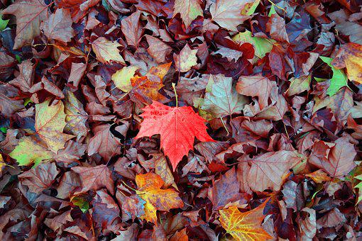 Leaf, Fallen Leaves, Autumn Leaves, Autumn, Red Leaf