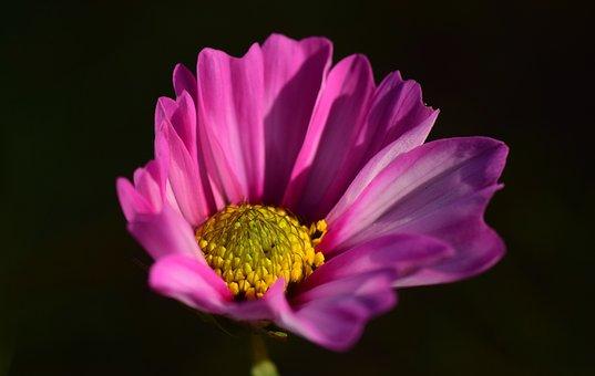 Pointed Flower, Purple, Nature, Flower, Blossom, Bloom