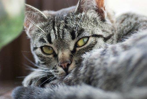 Cat, Look, Stripes, Cute, Animal, Domestic, Kitten, Pet