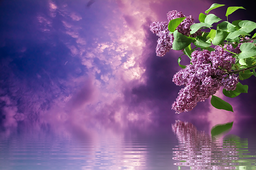 Lilac, Spring, Nature, Branches, Purple, Garden