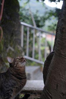 Xinbei, Monkey Cave, Cat