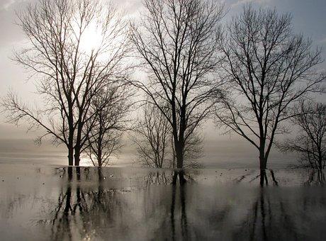 Trees, Winter, Reflections, Sunrise, Landscape, Morning