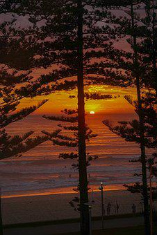Sunrise, Manly, Manly Beach, Pine Trees, Australia
