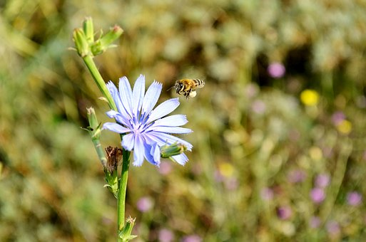 Flower, Bee, Babu, Nature, Macro, Spring Flowers, Plant