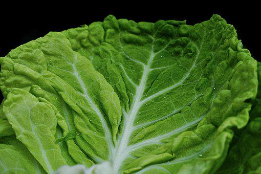 Savoy, Green, Kohl, Healthy, Savoy Cabbage, Eat