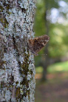 Tree, Moss, Forest, Nature, Moth, Butterfly
