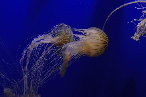 Aquarium, Fish, Anemone, Water, Ocean, Sea, Saltwater
