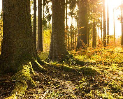 Forest, Winter, Autumn, Sun, Gold, Cold, Nature, Tree