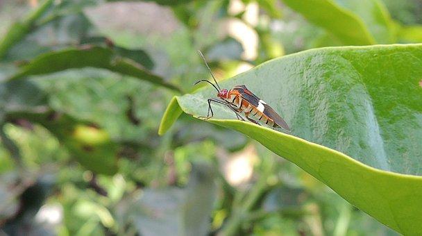 Insect, Bichito, Macro, Garden, Colombia