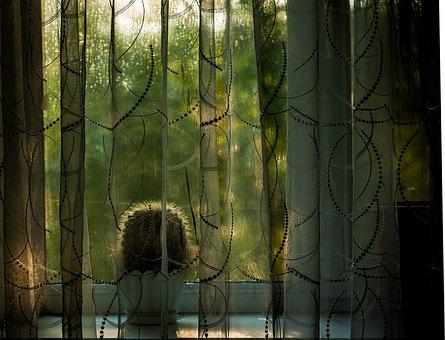 Window, Curtain, Cactus, Morning
