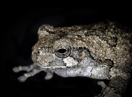 Frog, Animal, Amphibian, Macro, Nature, Cute, Eye