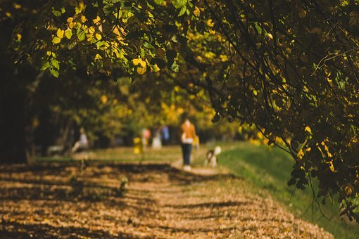 Autumn, Walk, Path, Fall, Nature, Park, Woman, Season