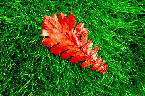 Oak, Leaf, Oak Leaf, Grass, Fallen Leaf, Autumn