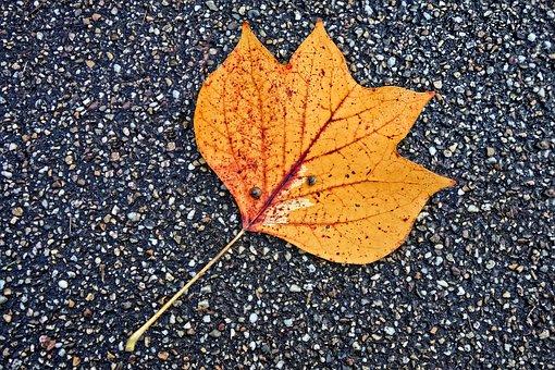 Leaf, Fallen Leaf, Road, Autumn Leaf, Pattern, Vein