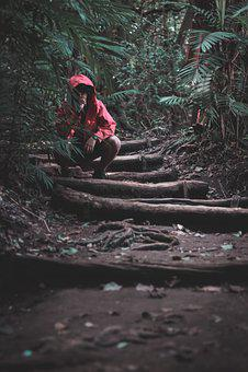 Forest, Dark, Red, Green