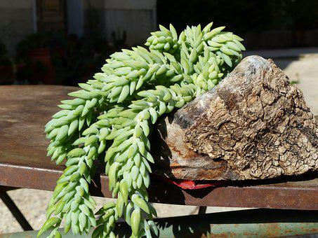 Succulent Plant, Fat Plants, Green, Fat, Nature, Plant