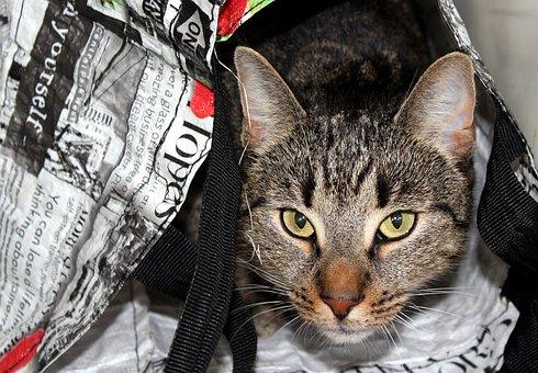 Cat, Pet, Hide, Hiding, Hidden In The Bag