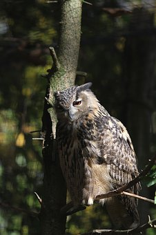 Tawny Owl, Eagle Owl, Raptor, Owl, Nocturnal, Feather
