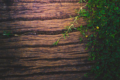 Wood, Background, Wooden, Nature, Plant, Texture, Green
