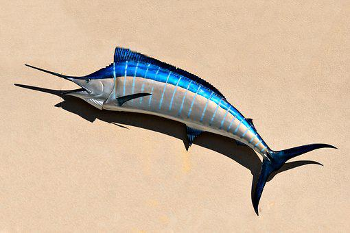 Blue Marlin, Fish, Fish Mount, Taxidermy, Salt Life