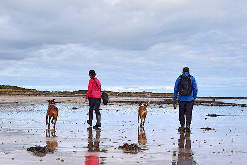 Couple, Beach, England, Boxer Dogs, Dogs, Walking