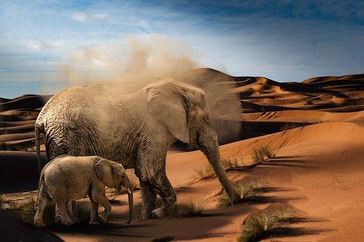 Elephant, Baby Elephant, Desert, Africa, Animals