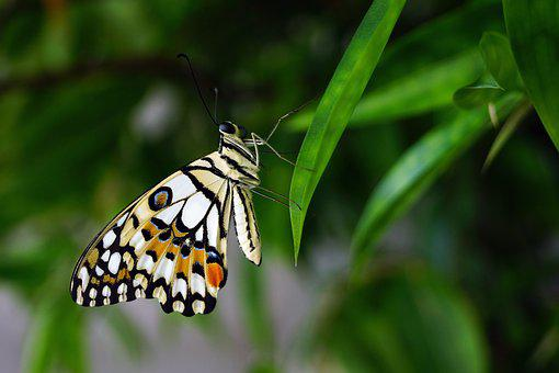 Butterfly, Insert, Nature, Colourful, Shape, Fly, Leaf