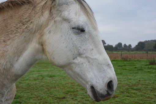 Horse, Eyes Closed, Closed Eye