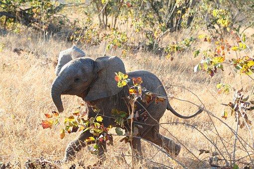 Mammal, Africa, Elephant, Baby Elephant, Animal