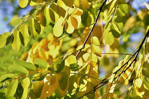 Fall Foliage, Leaves, Branches, Autumn, Fall Color